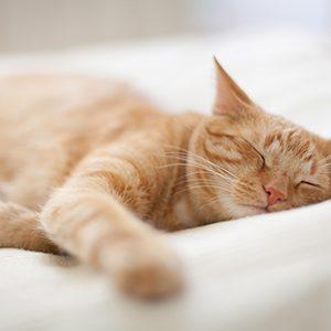CatSleeping